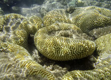 Coral reef in red sea Stock Photos