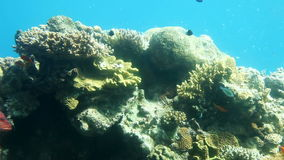 Coral reef of Red Sea stock video footage