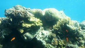 Coral reef of Red Sea. Underwater Observatory Marine Park. Eilat, Israel stock video footage