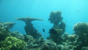Coral reef of Red Sea. Underwater Observatory Marine Park. Eilat, Israel stock footage