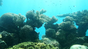 Coral reef. Red Sea Royalty Free Stock Photos