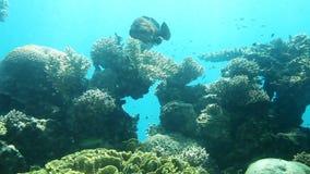 Coral reef. Red Sea. Coral reef of Red Sea. Underwater Observatory Marine Park. Eilat, Israel stock video footage