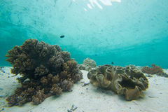 Coral reef reflection. A coral reef is reflected in the still waters above Stock Photo