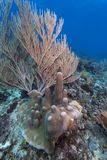 Coral reef  - Roatan Honduras Royalty Free Stock Photos