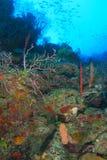 Coral Reef - Roatan, Honduras Stock Photo