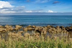 Coral reef rock coastline with grass royalty free stock photography