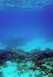 Coral reef and sand underwater. Underwater shot of coral reef, Red Sea, Egypt stock images