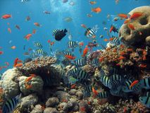 Coral Reef Scene. A lively coral reef, with many fish and bubbles in the background royalty free stock photo