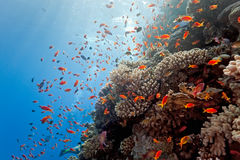 Coral reef scene Stock Images