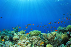 Coral Reef Scene Stock Image