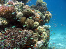 Coral Reef Scene. A picture of a coral reef. shot in the Red Sea stock images
