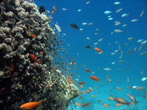 Coral Reef Scene. A picture of a coral reef. shot in the Red Sea stock photos