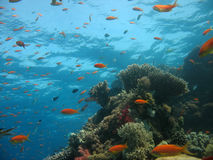 Coral Reef Scene. With many fish Stock Images