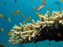 Coral Reef Scene. With many fish Stock Photo