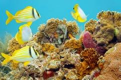 Coral Reef Scene Fotografia Stock