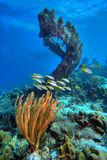 Coral reef scene. With soft corals in the foreground and arch in the background Stock Images