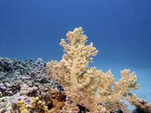 Coral reef scene stock photo