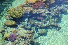 Coral Reef Scene Arkivfoton