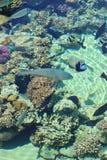 Coral Reef Scene Fotografering för Bildbyråer
