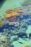 Coral Reef Scene Royaltyfri Bild