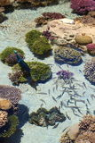 Coral Reef Scene immagine stock