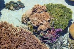 Coral Reef Scene Royaltyfri Foto