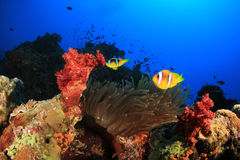 Coral Reef Scene with Clownfish Stock Image