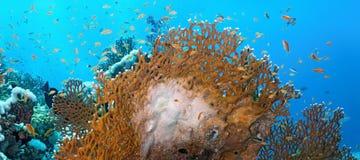 Coral reef scene - panorama Stock Photos