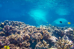Coral Reef Scene with Tropical Fish in sunlight Stock Photo