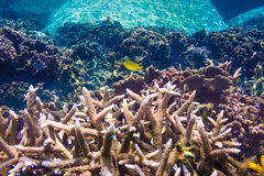 Coral Reef Scene with Tropical Fish in sunlight Stock Images