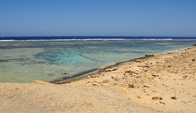 Coral reef. Scenic landspace in el quesir in egypt Stock Image
