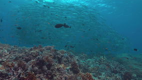 Coral reef with a school of Big-eye Trevallies.  4k. Colorful coral reef a school of Big-eye Trevallies. 4k footage stock footage