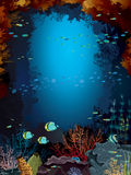 Coral reef and school of fish. Stock Image