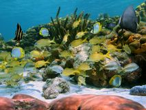School of tropical fish in a coral reef Royalty Free Stock Photos