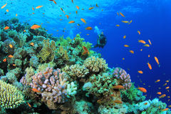 Coral Reef and Scuba Diver Stock Photos