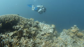 Coral reef and scuba diver. A full shot of a coral reef underwater. Camera moves forward to show a huge part of the coral reef and shows a scuba diver stock video footage
