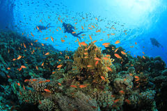 Coral Reef and Scuba Divers Stock Images