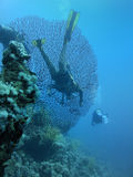 Coral reef and scuba divers. An underwater view of coral and scuba divers Royalty Free Stock Photography