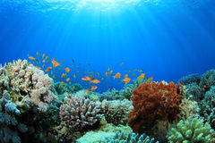 Coral Reef in the Sea Stock Photography