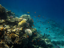 Coral reef in sea Stock Photos