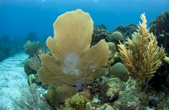 Coral reef sea fan Stock Photo