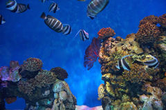 Coral reef and sea fish Stock Photos