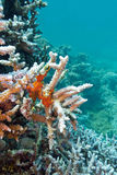 Coral reef with sea sponge in tropical sea Stock Photos