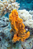 Coral reef with sea sponge in tropical sea- underwater Royalty Free Stock Photo