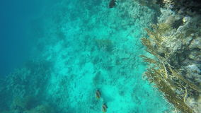 A coral reef and seabed. Slow motion stock video