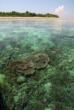 Coral reef seascape sipadan island borneo stock photos