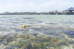 Coral Reef. Shallow coral reef at Mabul Island, sabah, Malaysia Royalty Free Stock Photography