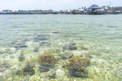 Coral Reef. Shallow coral reef at Mabul Island, sabah, Malaysia Royalty Free Stock Images