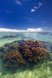 Coral reef in shallow tropical water lagoon. Stock Images
