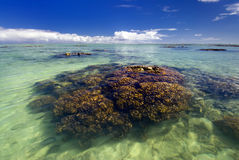 Coral reef in shallow tropical water lagoon. Stock Photos